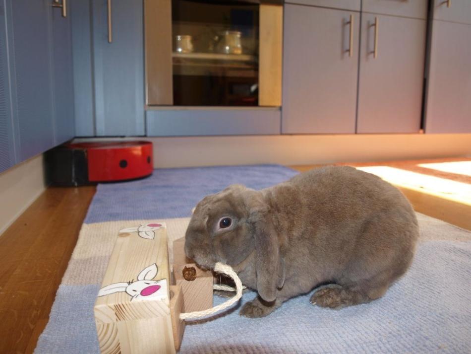 Декоративный кролик в домашних условиях