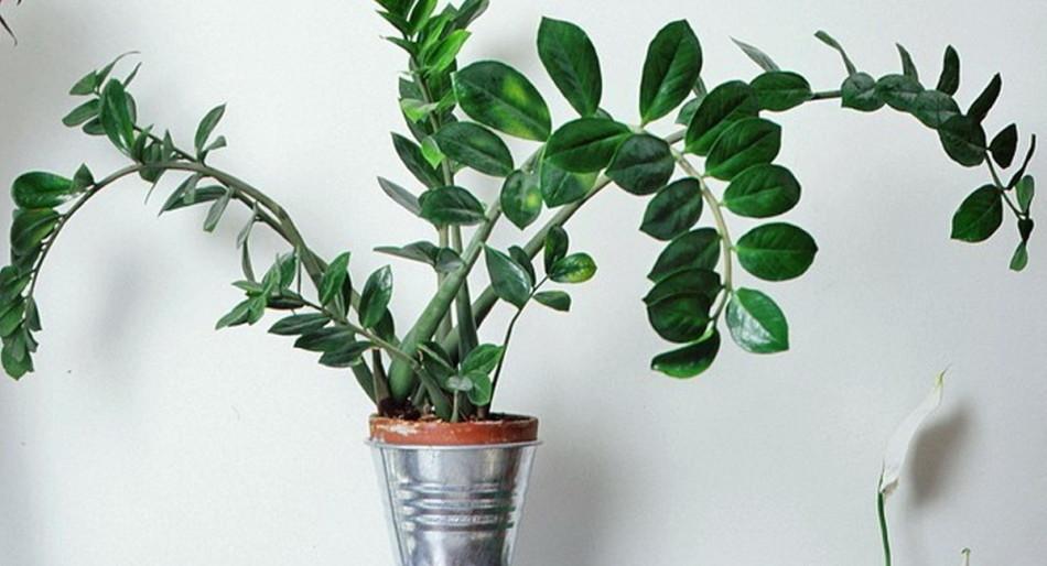 Для маленького растения выбирайте маленький горшок, для большого - побольше