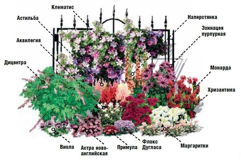 Схемы цветников для начинающих фото