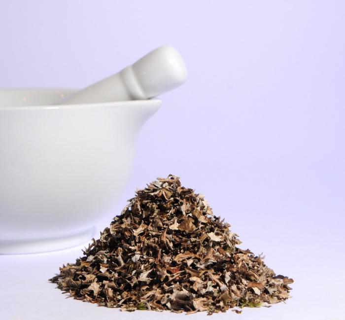Для улучшения вкуса заваривайте мох на молоке
