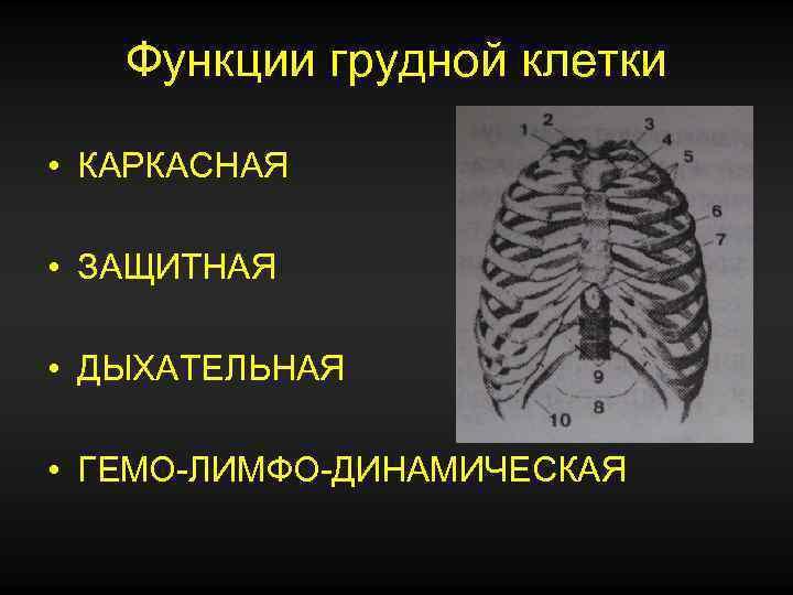 Изображение 6. основные функции грудной клетки.