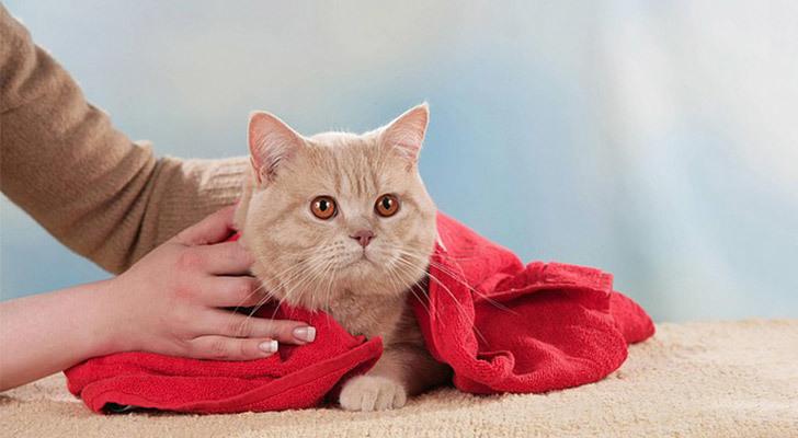 После купания кота нужно согреть и высушить.