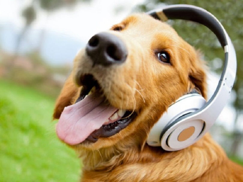 Музыка и природа отлично поднимают настроение