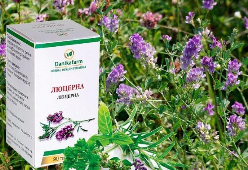 Люцерна — незаменимый сидерат и лекарственная травка