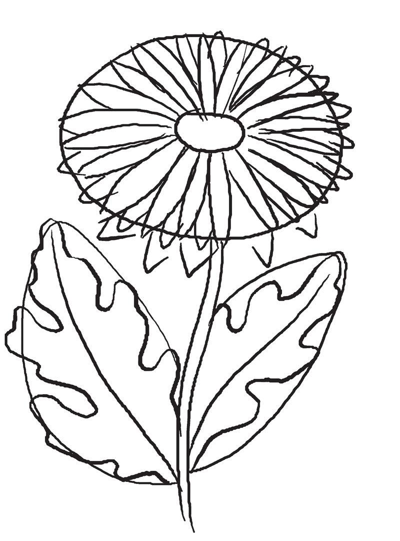 Как нарисовать хризантему карандашом: шаг2 — лепестки и листья