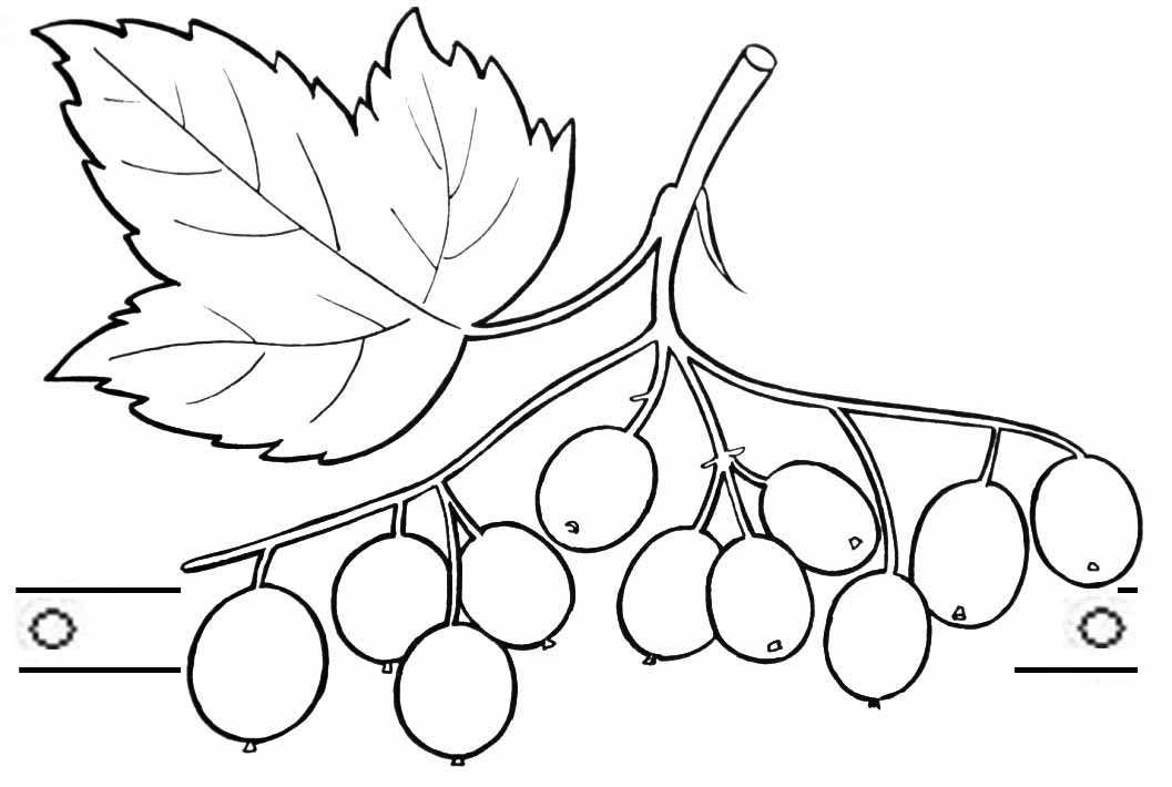 2cfb17577fb686b4255e27380f79d89e Как нарисовать калину? Как нарисовать ветку и куст калины карандашом?