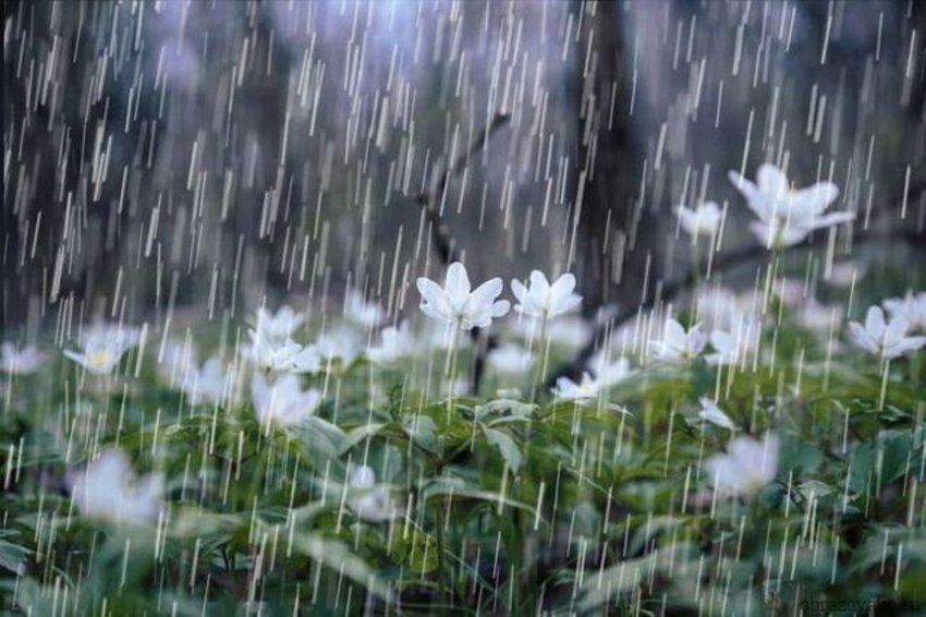 Приснилось, что идет дождь