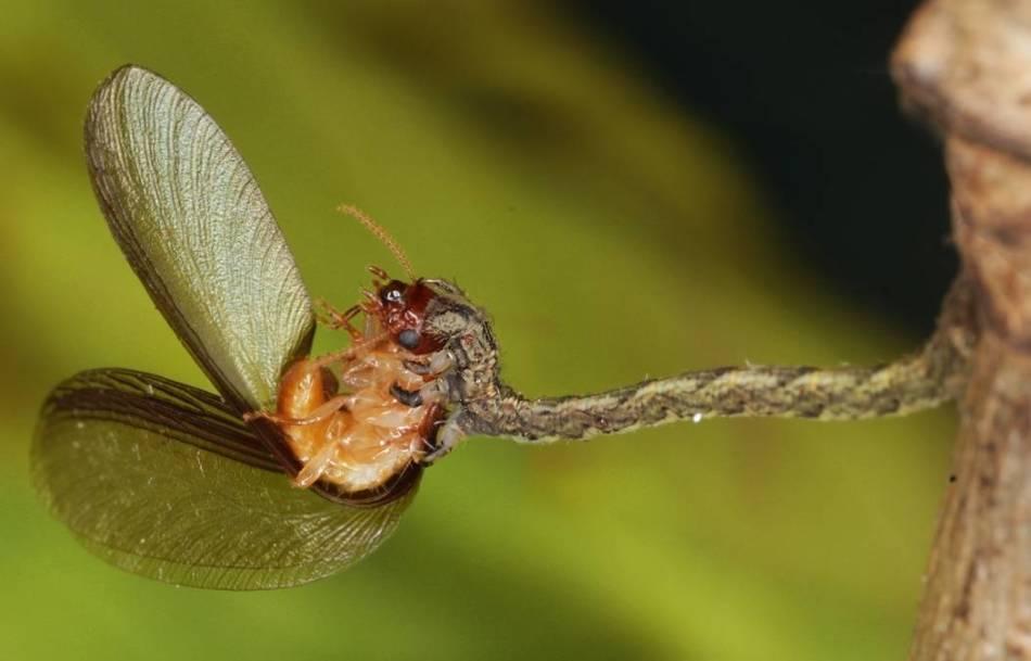 Еда гусениц