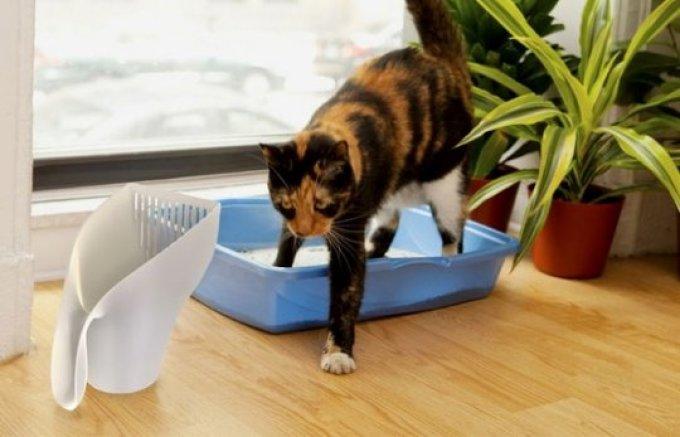 Згребать свои испражнения - кошачий инстинкт.