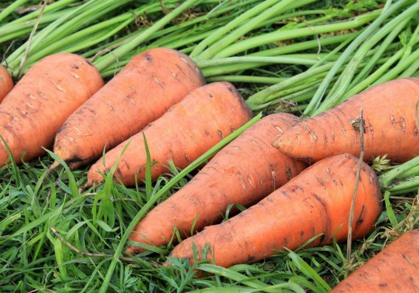 Морковку