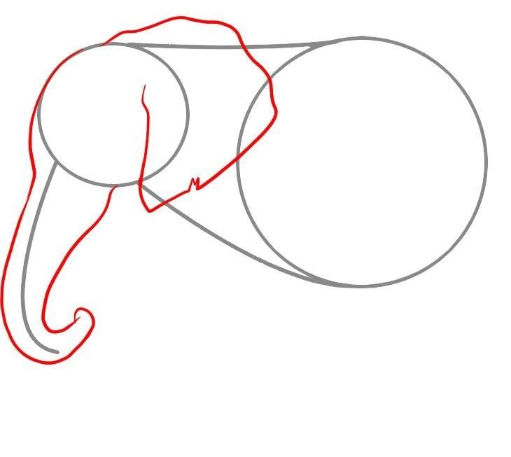 kak-narisovat-slona-karandashom-rabota-nad-golovoi-zhivotnogo Как нарисовать слона поэтапно: 5 вариантов как легко и просто нарисовать слона карандашом