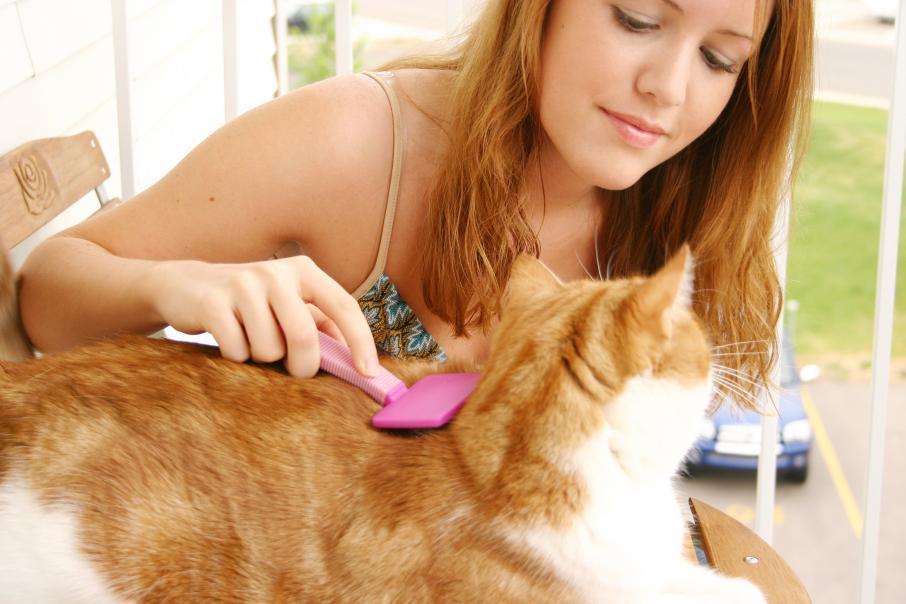 Частота вычесывания и тип щетки зависят от породы кота и длины его шерсти.