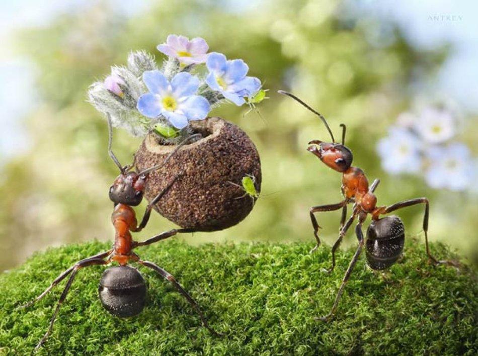Приметы, связанные с муравьями