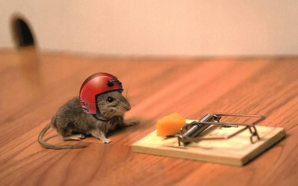 Приобретите на алиэкспресс средства для борьбы с мышами