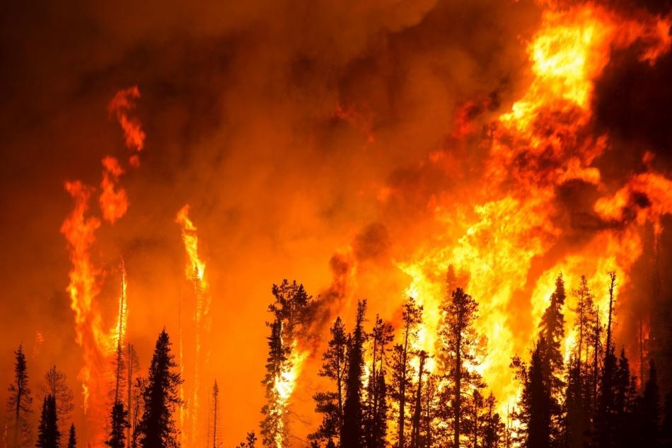 Пожар в лесу во сне предвещает скандалы и ссоры наяву.