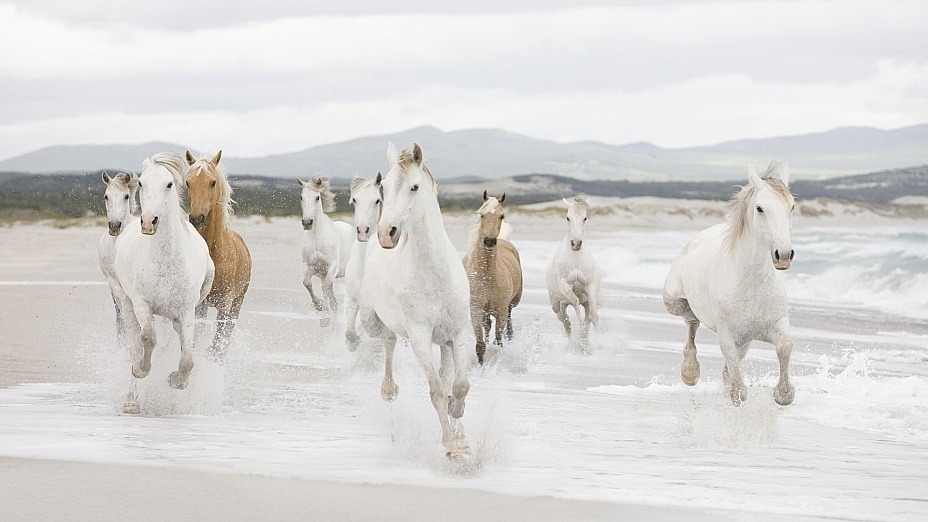 Сны, в которых вы видели лошадь - значение