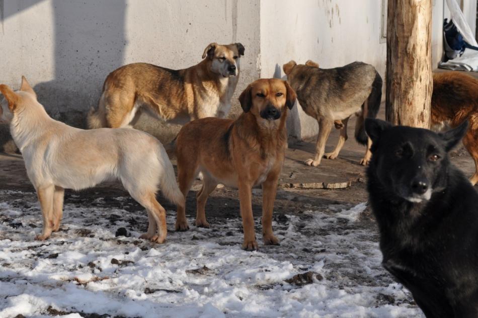 породы собак уличного содержания