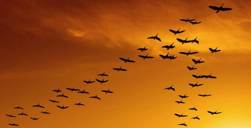 Птицы улетают к холодам