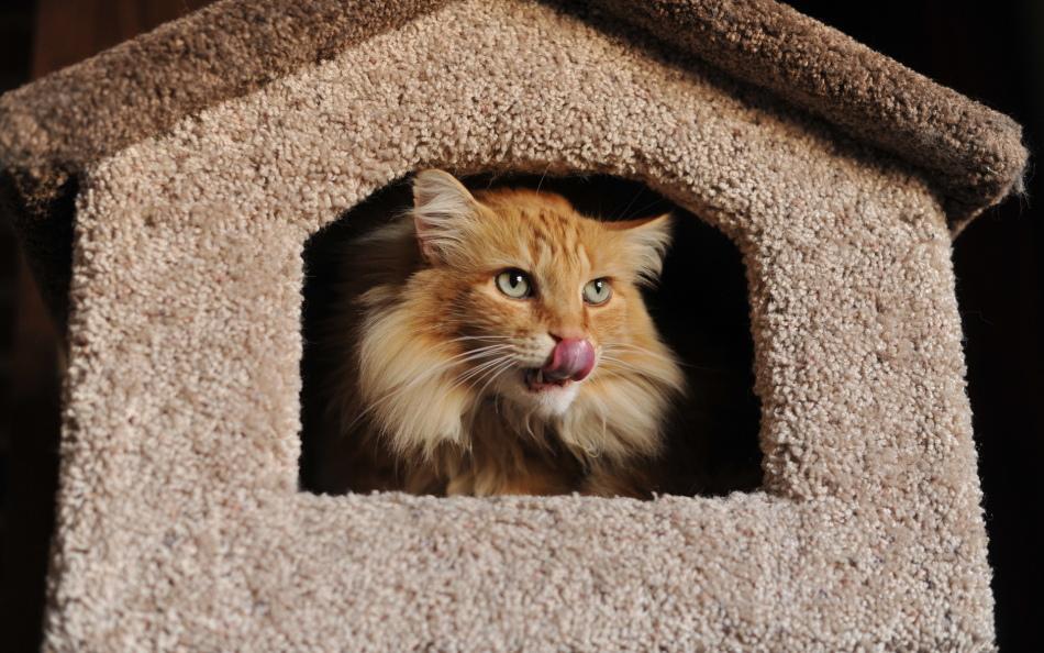 Подарить кошке дом, и вы увидите взгляд, который вас никогда не предаст.