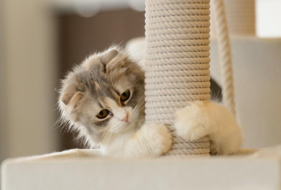 Приучайте к когтеточке с раннего возраста кошки.