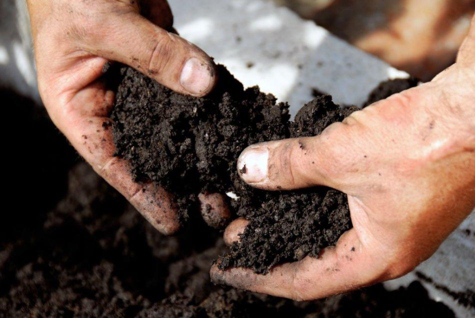 Подготовка почвы для посадки семян баклажан