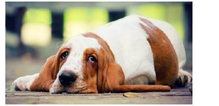 Фосфатаза у собак