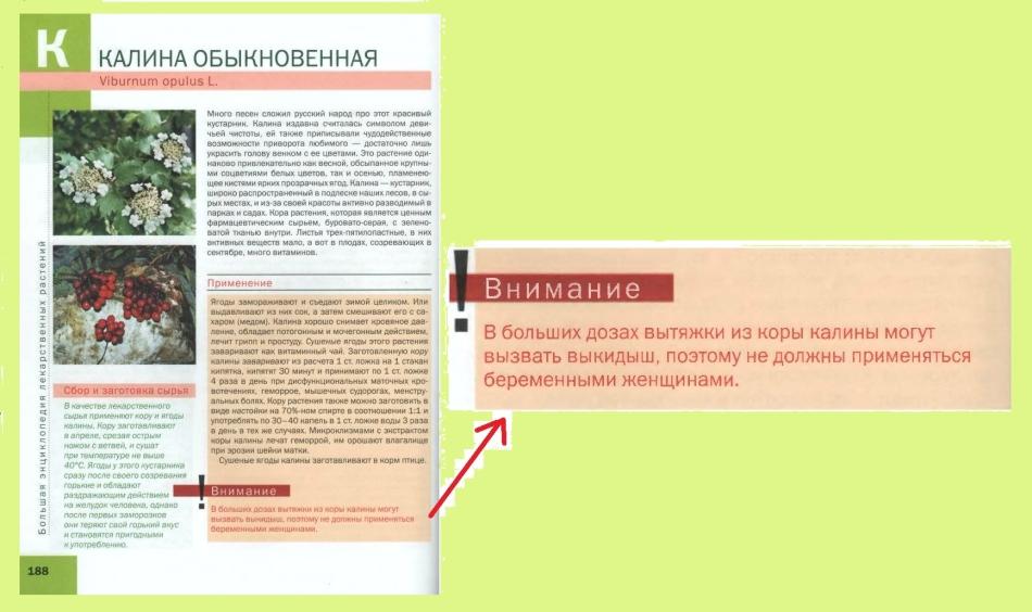 Калина при беременности: страница из энциклопедии {amp}quot;лекарственные растения{amp}quot; ильиной