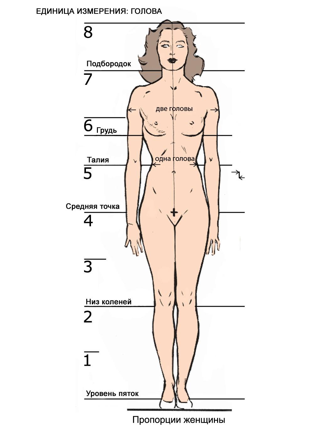 proporcii-zhenshini Как рисовать ноги человека? Подробно рассмотрим строение и технику рисования