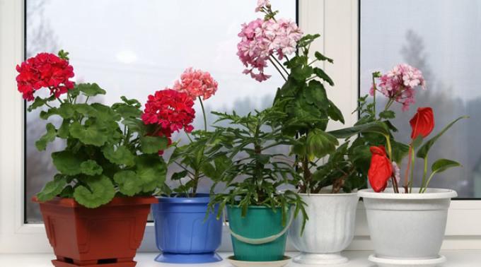 Благоприятные дни для комнатных растений и цветов в октябре