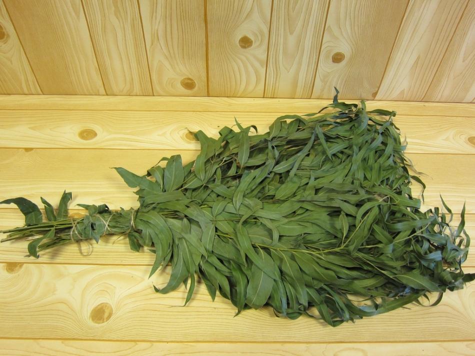 Эвкалиптовый банный веник в идеале должен иметь листочки сочного зеленого цвета