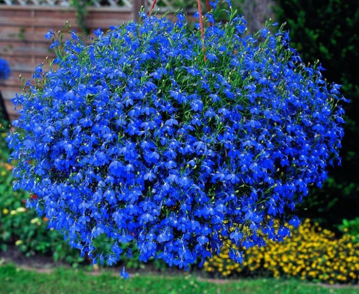 Яркое летнее цветение