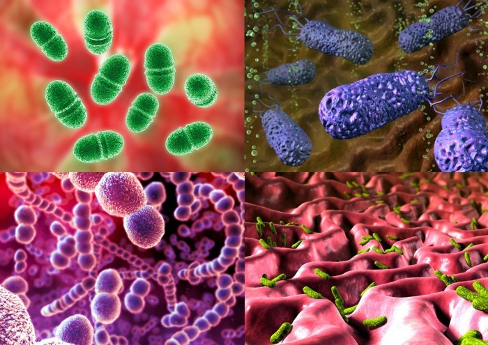 Панаприций провоцируют пиогенные бактерии.