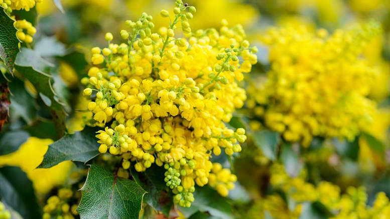 Мелкое цветение