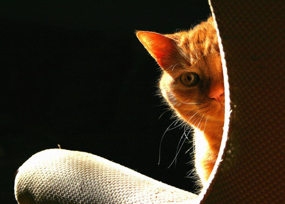 Если кот не ходит на лоток, не нужно пинять на его пакостную натуру. скорее всего, такому поведению есть объективное объяснение.