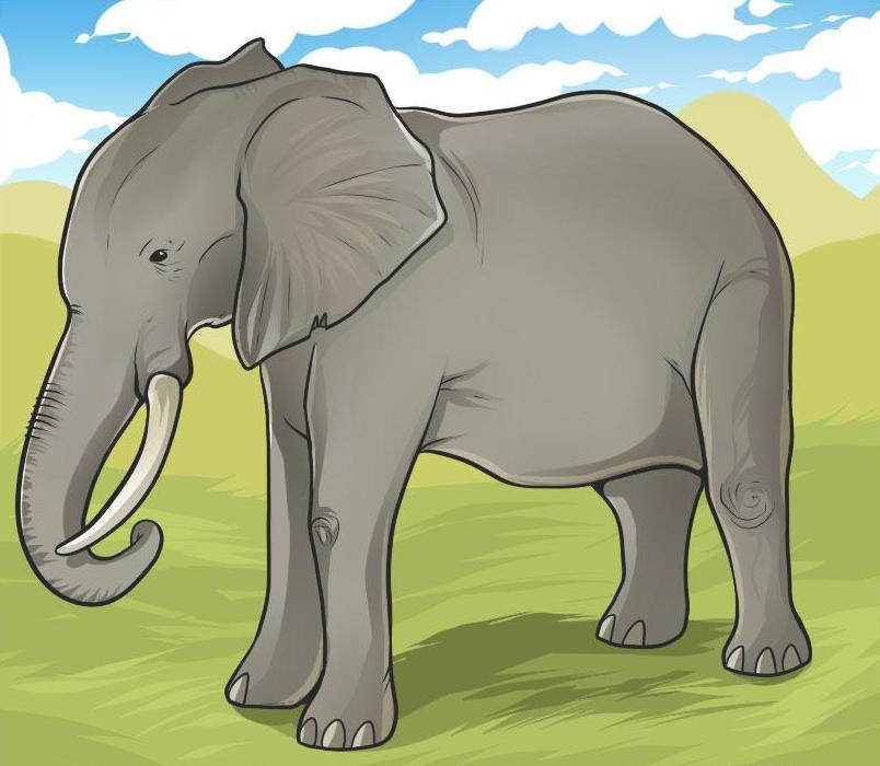 kak-narisovat-slona-karandashom Как нарисовать слона поэтапно: 5 вариантов как легко и просто нарисовать слона карандашом