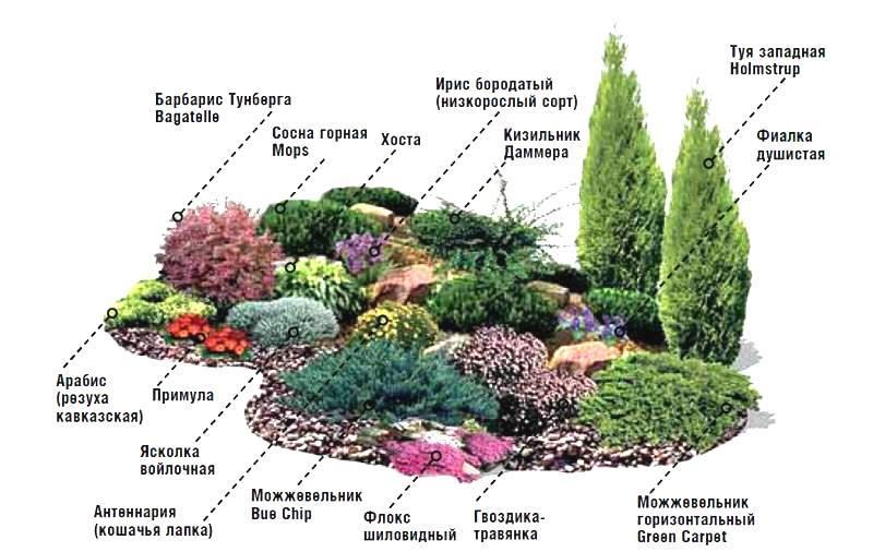 Схема посадки растений на альпийской горке