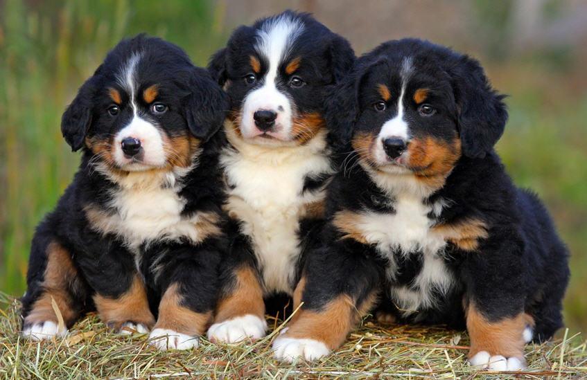 Любвеобильные псы