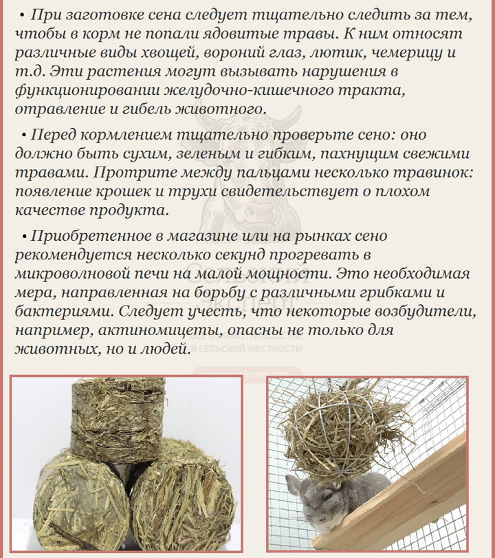 Как выбрать сено для шиншиллы