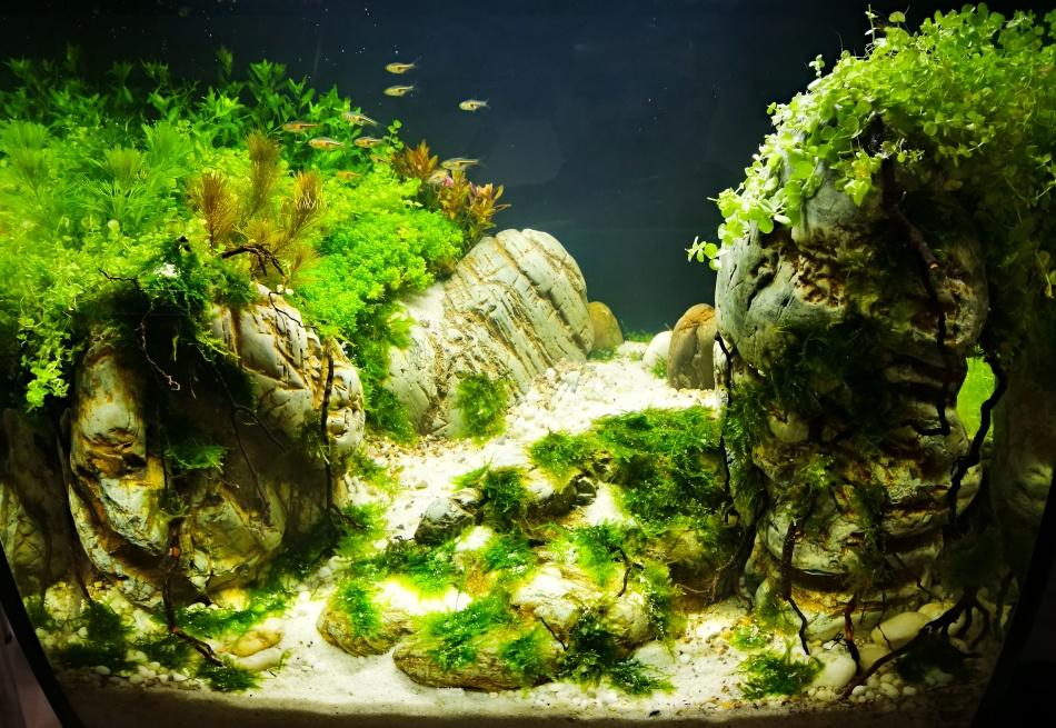 подходит земля в аквариуме фото растением