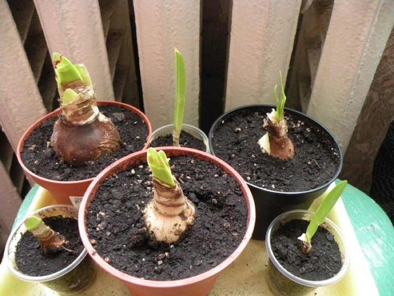 Растения после размножения