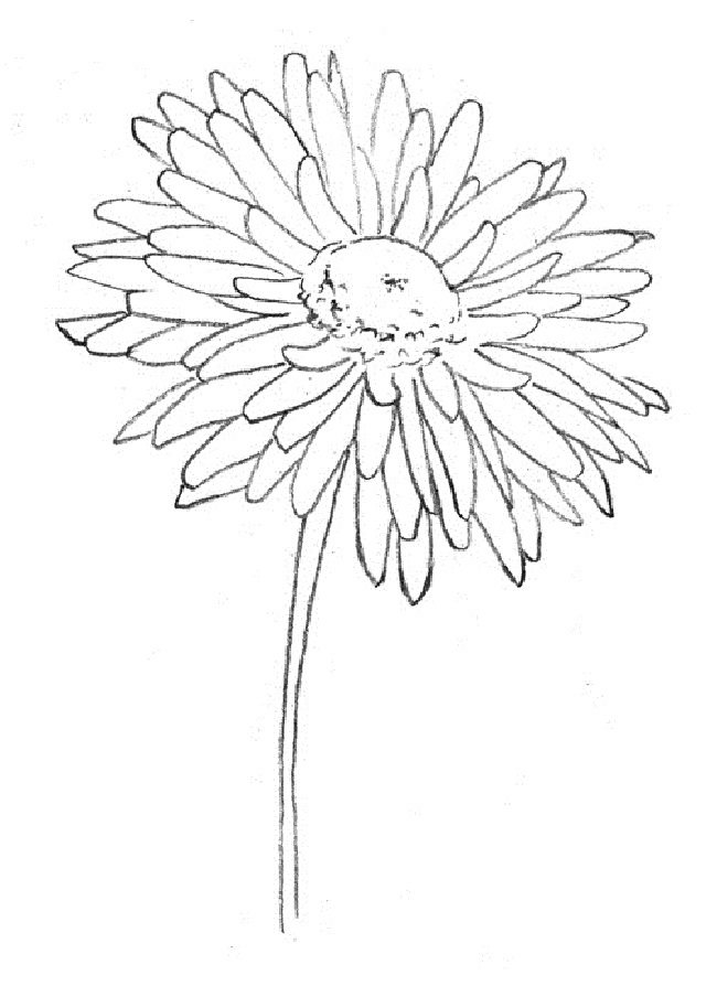 Как нарисовать хризантему: работа над лепестками