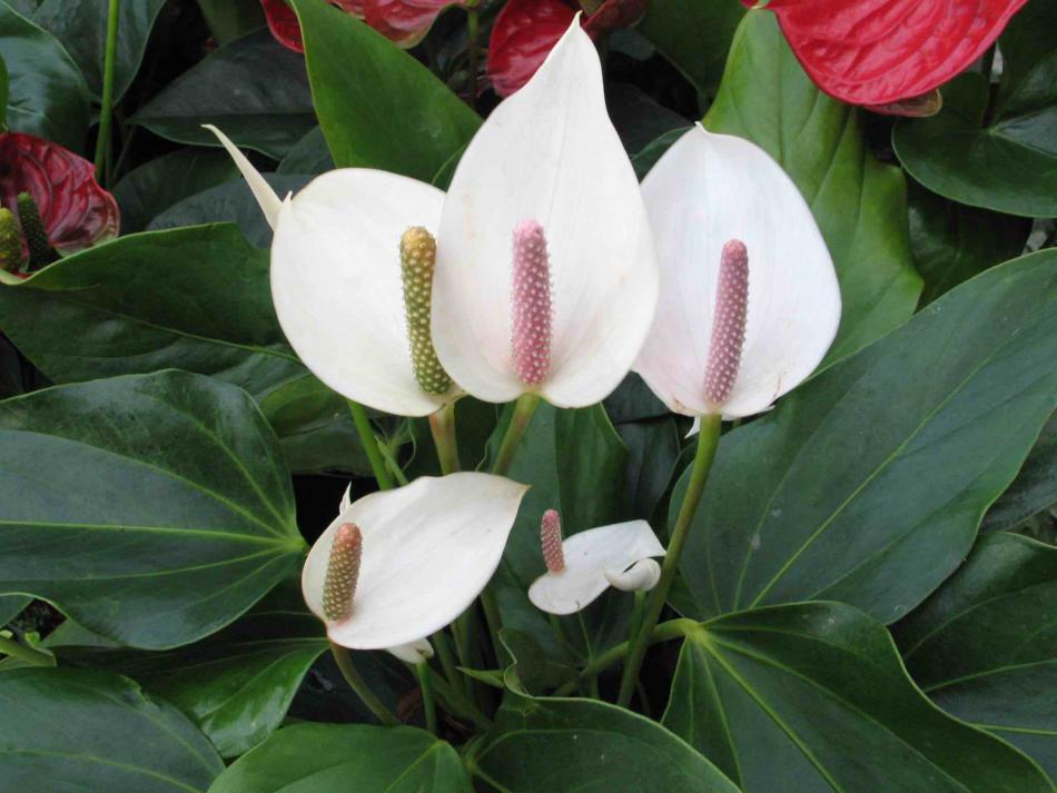 Благоприятные дни для комнатных растений и цветов в мае