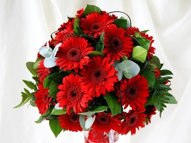 Красные герберы отлично дополнят белый наряд невесты - необходимо лишь расставить несколько акцентов в этом же цвете