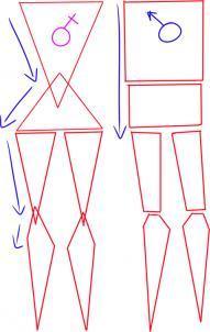 tulovishe-zhenshini-sleduet-predstavit-v-vide-dvuh-treugolnikov Как рисовать ноги человека? Подробно рассмотрим строение и технику рисования