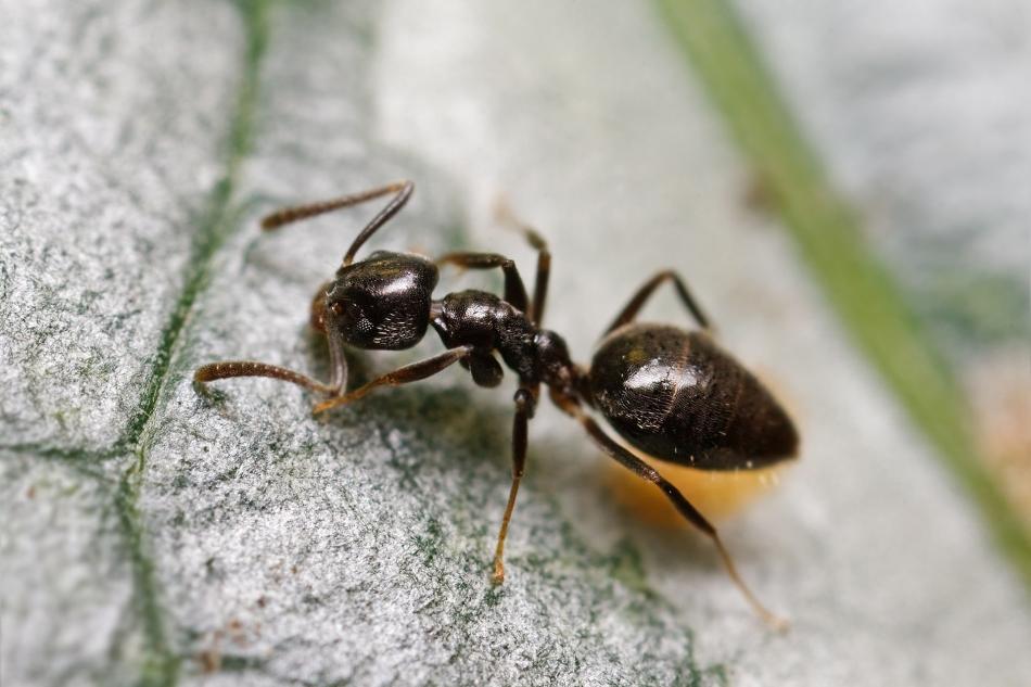 Приметы про муравьев на могиле
