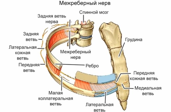 Болит позвоночник посередине спины после сна при межреберной невралгии