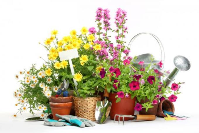 Благоприятные дни для комнатных растений и цветов в январе