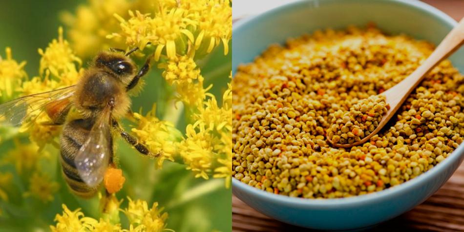 Пчелиная пыльца, собранная с улья и помещенная в емкость для хранения.