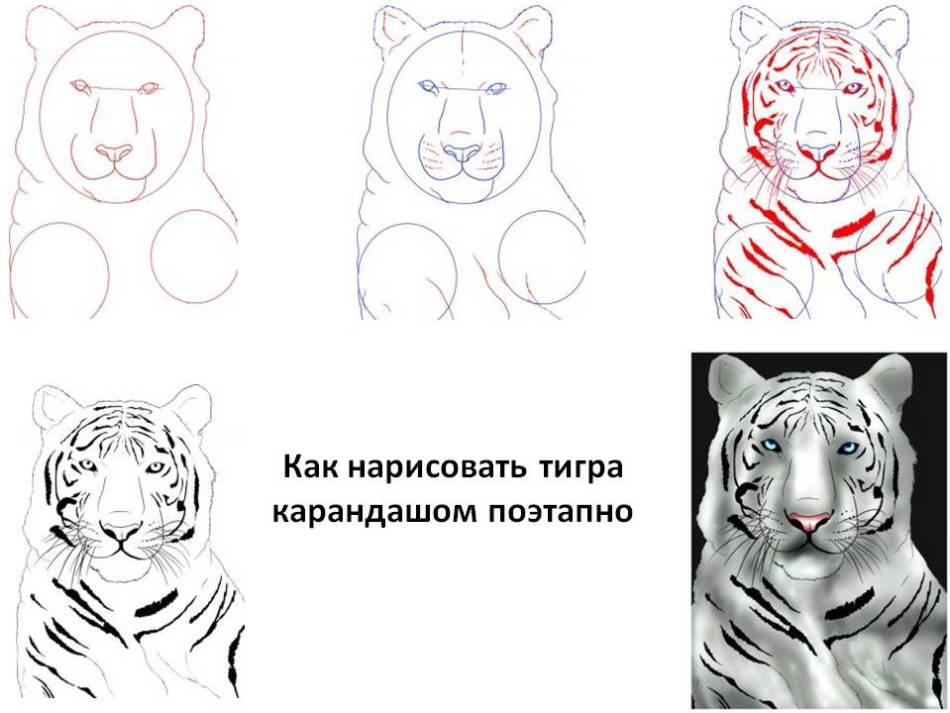 Рисунки карандашом тигр для начинающих