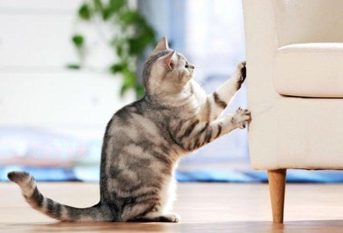 Поврежденная мебель - результат игнорирования потребностей животного